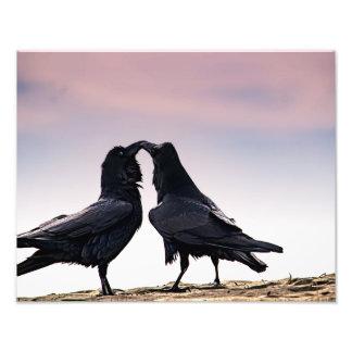 Talking Raven photo print