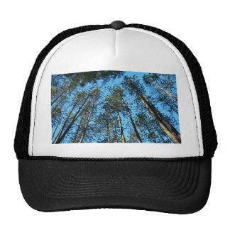 Tall Aspirations Trucker Hat