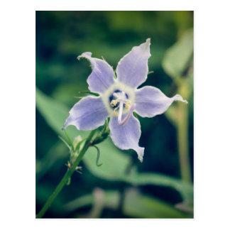 Tall Bellflower Wildflower Postcard