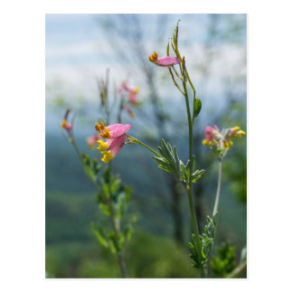 Tall Corydalis Wildflower Vertical Postcard