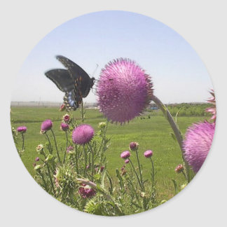 Tall Grass Prairie Butterfly on Violet Thistle Classic Round Sticker