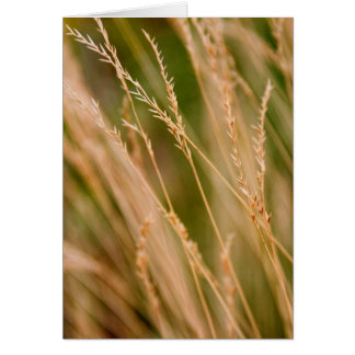 Tall Grass Prairie Close-up (card) Card
