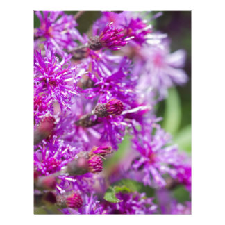 Tall Ironweed Wildflowers Letterhead