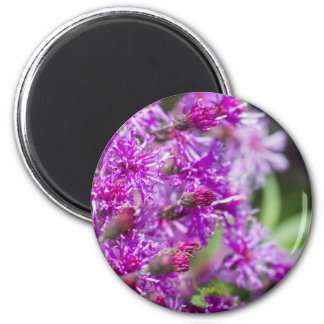 Tall Ironweed Wildflowers Magnet