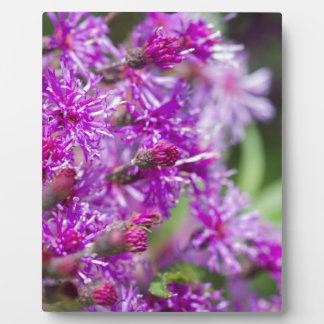 Tall Ironweed Wildflowers Plaque