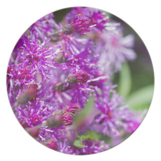 Tall Ironweed Wildflowers Plate