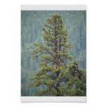 Tall Pine Print