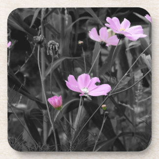 Tall Pink Poppies in the wind Coasters