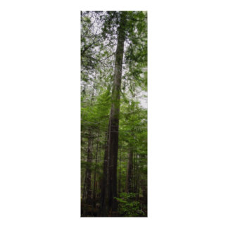 TALL TREE in Forest Art Poster