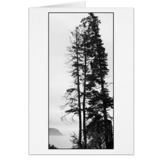 Tall Trees and Mist Card
