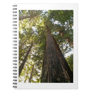 Tall Trees Journal Redwood Sequoia Notebook