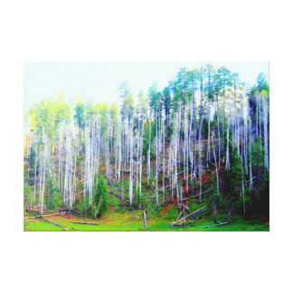 tall trees wrapped canvas