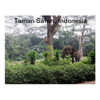 Taman Safari Postcard