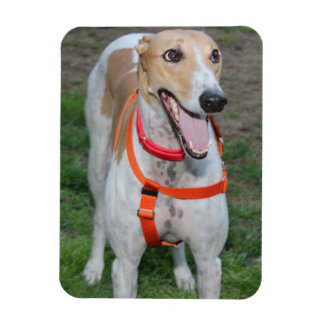 TAN AND WHITE GREYHOUND MAGNET