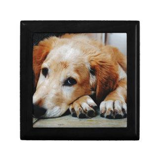 Tan and White Short Coat Dog Gift Box
