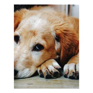 Tan and White Short Coat Dog Letterhead