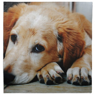 Tan and White Short Coat Dog Napkin