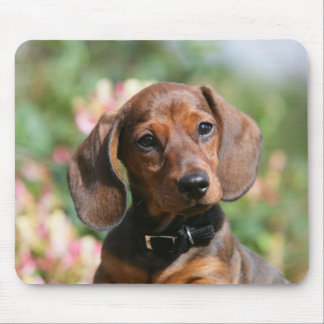 Tan Miniture Dachshund Mouse Pad