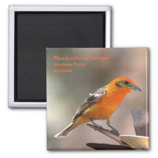 tanager magnet