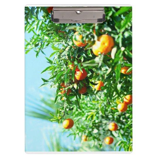 tangerine clipboards