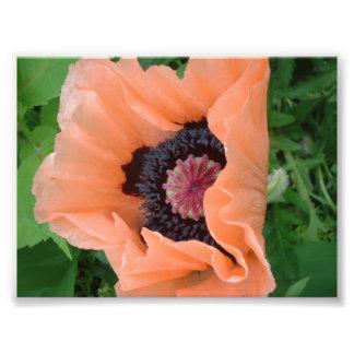 Tangerine colored poppy 2 art photo