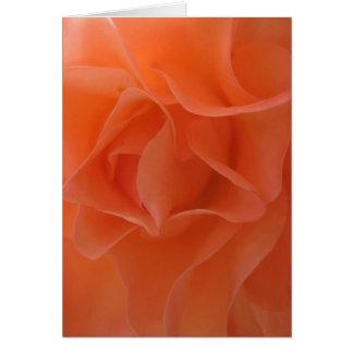 Tangerine Dream (1) Greeting Cards