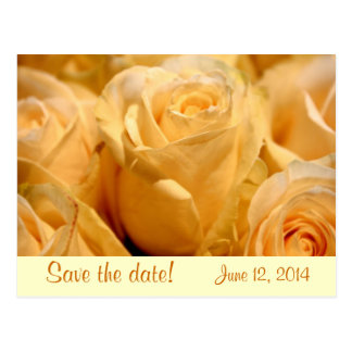 Tangerine Rose Save the Date Wedding Postcard