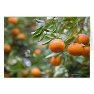 Tangerines hanging in tree card