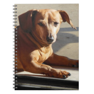 Tanning Stevie Notebooks