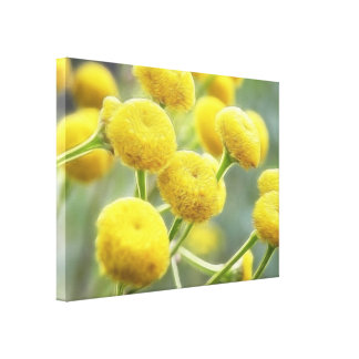 Tansy Flowers Gallery Wrap Canvas