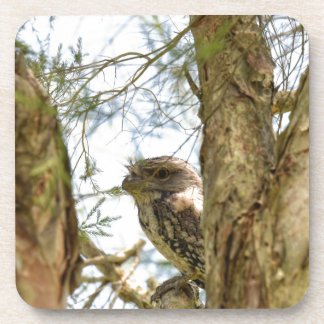 TANY FROGMOUTH QUEENSLAND AUSTRALIA COASTER