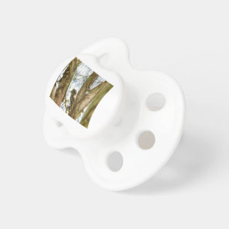 TANY FROGMOUTH QUEENSLAND AUSTRALIA PACIFIERS