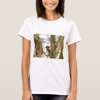 TANY FROGMOUTH QUEENSLAND AUSTRALIA T-Shirt