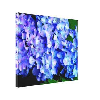 Tanzanite Hydrangeas Canvas Print