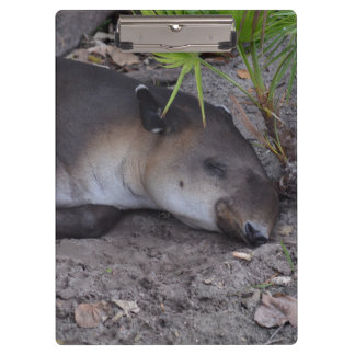 tapir sound asleep animal clipboard