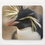 Tapis de souris de pingouin de Rockhopper