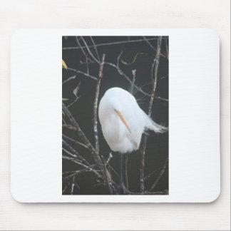 Tapis De Souris Oiseau de FB_IMG_1481504110273 (1) la Floride