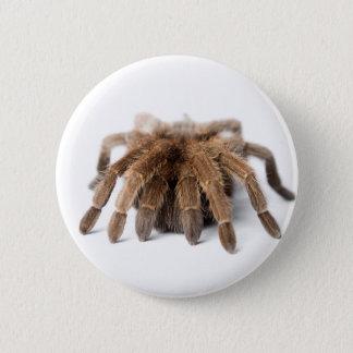 Tarantula Fuzzy Spider 2 Inch Round Button