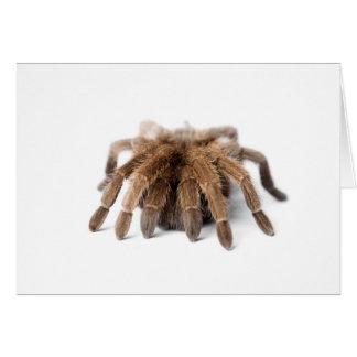 Tarantula Fuzzy Spider Card