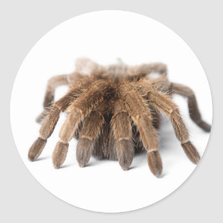 Tarantula Fuzzy Spider Classic Round Sticker