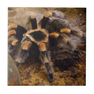 "Tarantula Small (4.25"" x 4.25"") Ceramic Photo Tile"