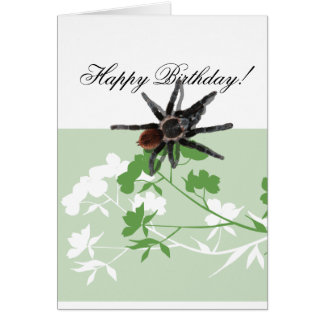 tarantula spider on dogwood blossom design cards