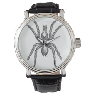 Tarantula Watch