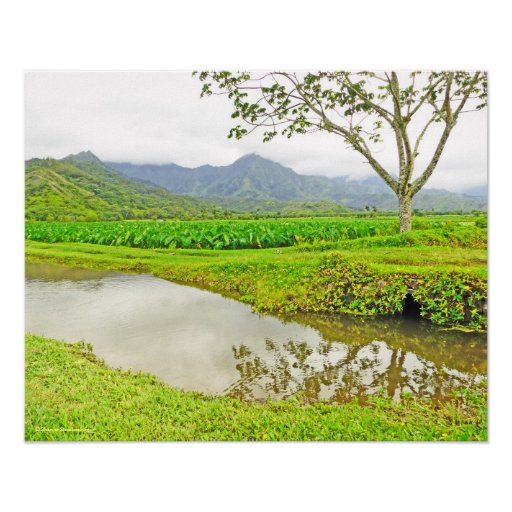 """TARO FIELDS ON WAY TO HANALEI"" POSTER"