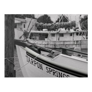 Tarpon Postcard