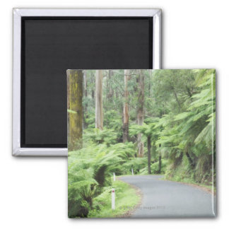 Tarra Bulga National Park, Strzelecki Ranges Magnet
