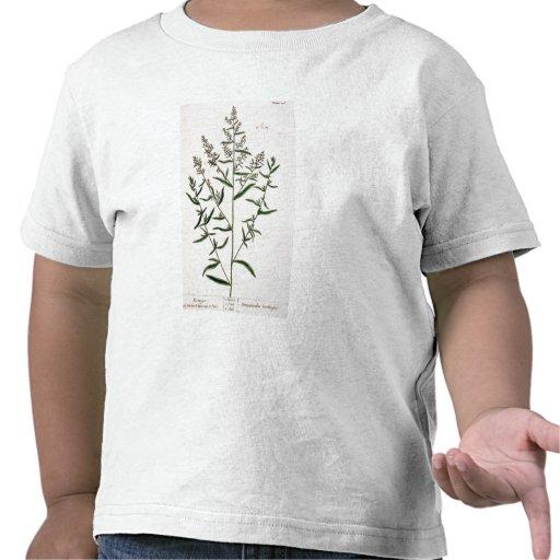 Tarragon, plate 116 from 'A Curious Herbal', publi Shirts