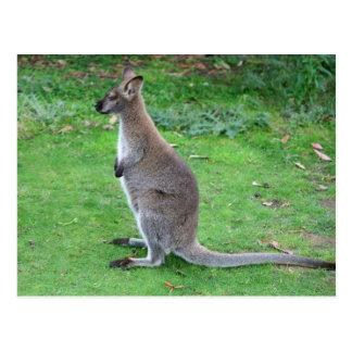 Tasmania, Australia Postcard