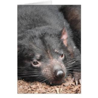 Tasmanian Devil Card