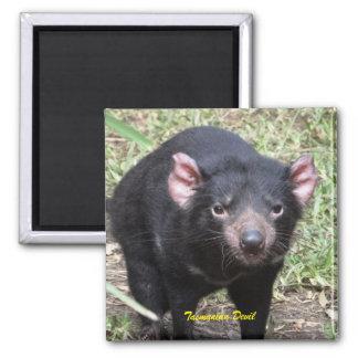 Tasmanian Devil Magnet
